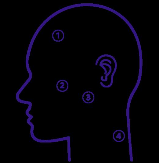 cranial image